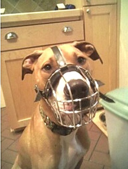 Best Fit Wire Basket Pitbull Muzzle - Multifunctional Tool