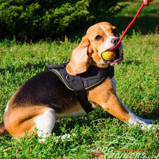 Lightweight Adjustable Nylon Beagle Harness for Pulling, Walking and Training