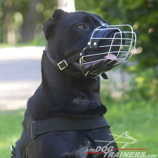 Cane Corso Basket-like Metal Dog Muzzle