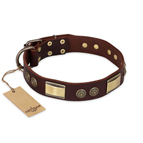'Golden Stones' FDT Artisan Brown Leather Dog Collar with Old Bronze Look Plates and Circles - 1 1/2 inch (40 mm) wide