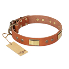 'Enchanting Spectacle' FDT Artisan Tan Leather Dog Collar with Old Bronze Look Plates and Round Studs - 1 1/2 inch (40 mm) wide