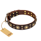 'Flower Melody' FDT Artisan Brown Leather Dog Collar with Mixed Studs