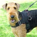 Airedale Terrier dog harness