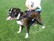 Boxer dog harness