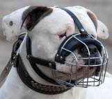 Wire Dog Muzzle Light For American Bulldog