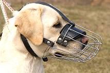 Basket Wire Dog Muzzle Light For Labrador