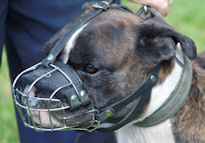 Wire Dog Muzzle Light for BOXER