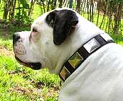Gorgeous Lola is wearing our War Dog Leather Dog Collar - Like in the movies - c83