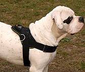 All Weather dog harness for tracking / pulling Designed to fit American Bulldog