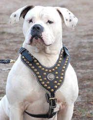 Royal Dog Harness-Exclusive Design Studded Leather Harness-American Bulldog