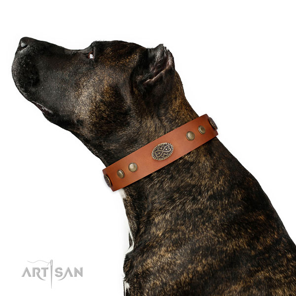 Amstaff easy wearing dog collar of exceptional quality genuine leather