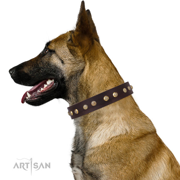 Belgian Malinois everyday use dog collar of significant quality natural leather