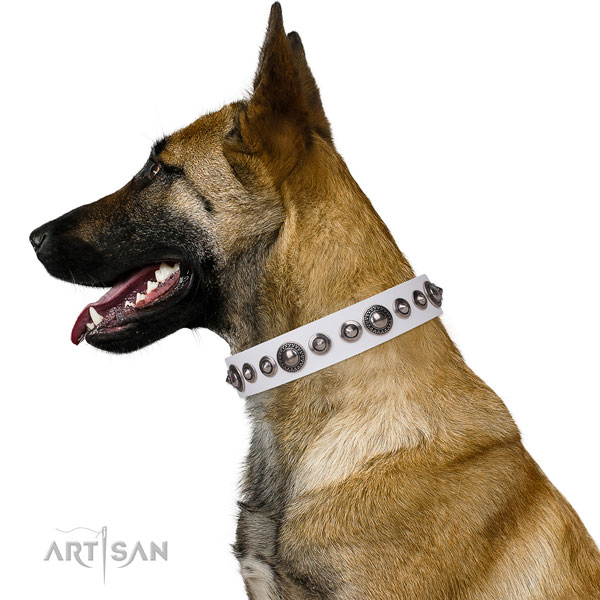Belgian Malinois amazing full grain natural leather dog collar with decorations