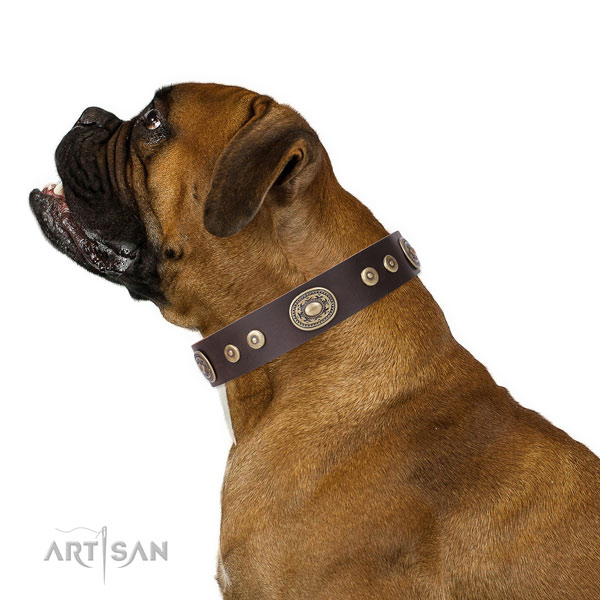 Boxer stylish leather dog collar with adornments