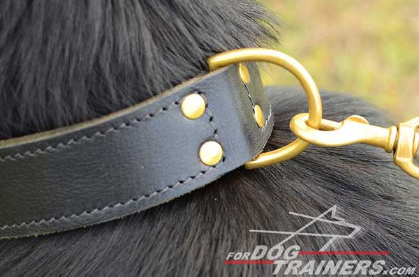 Brass D-Ring on Leather Training German Shepherd Collar