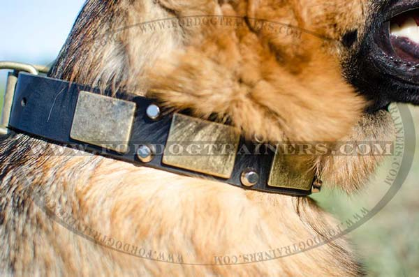 Brass Plates on Leather German Shepherd Collar Decorated Studs