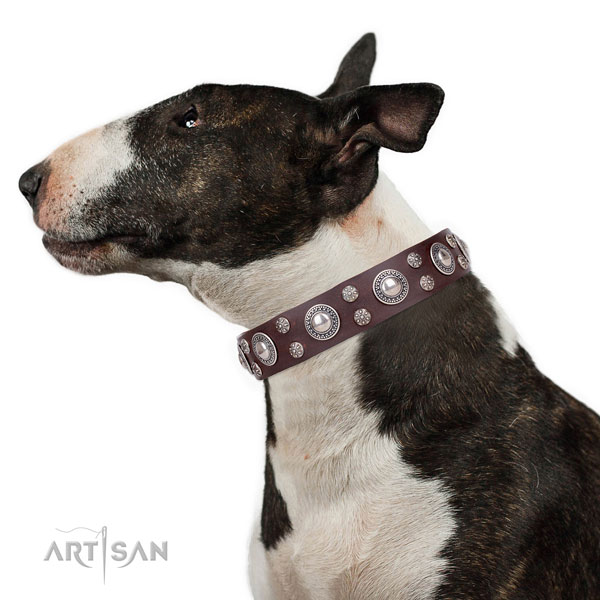 Bull Terrier fine quality natural genuine leather dog collar with embellishments