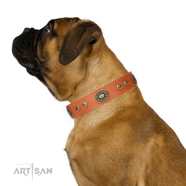 Bullmastiff inimitable genuine leather dog collar with studs