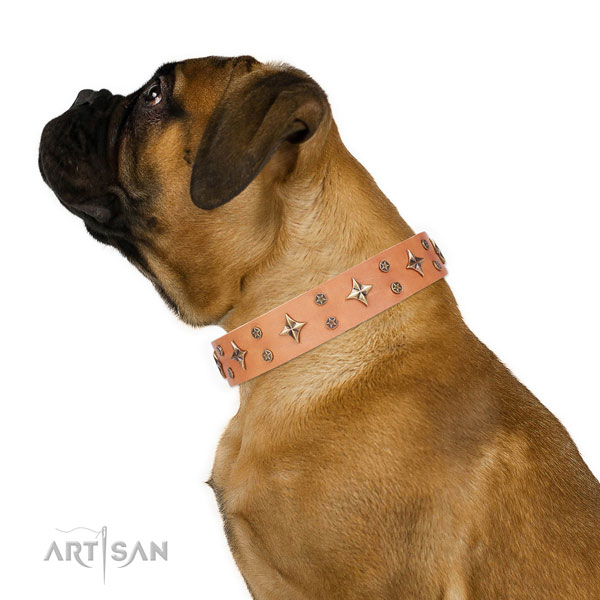 Bullmastiff exceptional genuine leather dog collar with studs