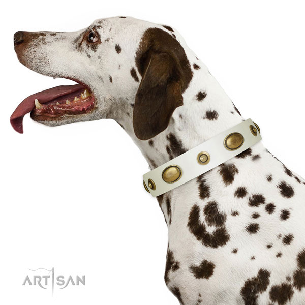 Dalmatian comfortable wearing dog collar of fine quality genuine leather