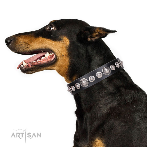 Doberman studded full grain natural leather dog collar with adornments