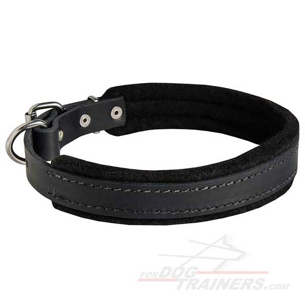 Padded Leather Dog Collar Carefully Stitched