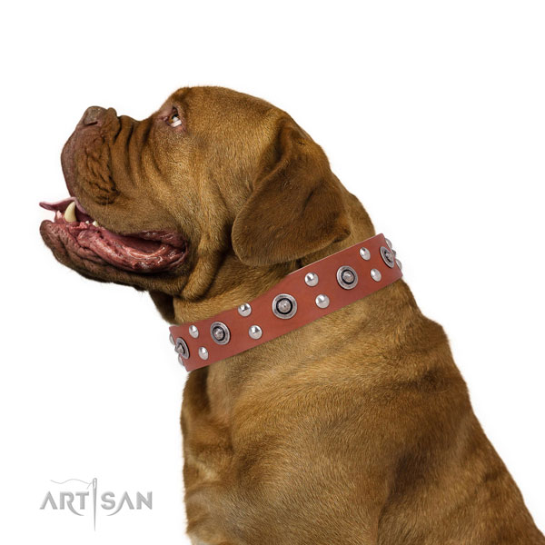 Dogue de Bordeaux walking dog collar of exquisite quality natural leather
