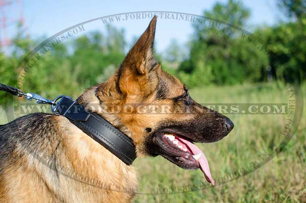 Training German Shepherd Collar