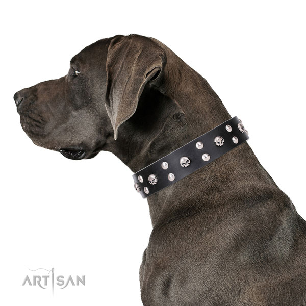 Great Dane designer full grain natural leather dog collar with studs