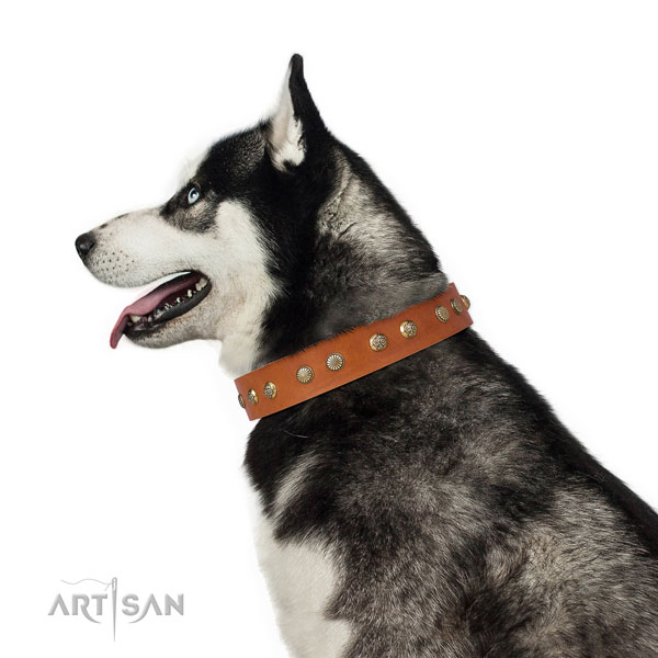 Husky everyday walking dog collar of awesome quality genuine leather