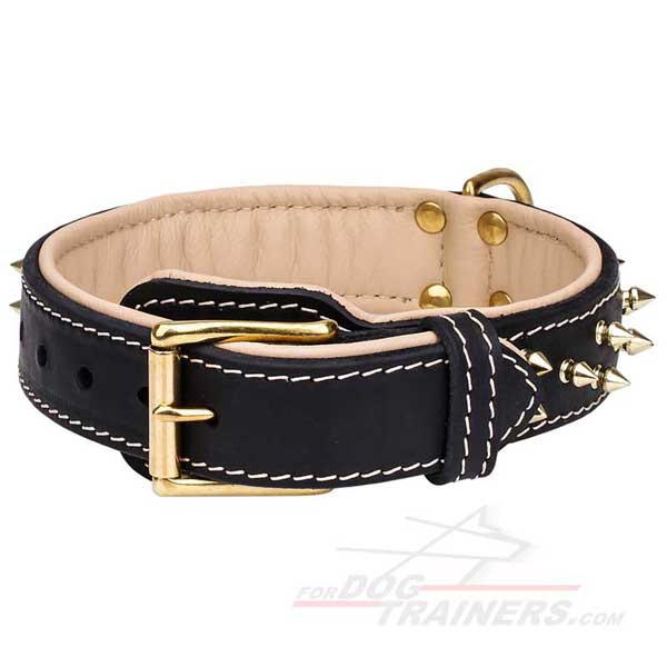 Leather Dog Collar Nappa Padded Brass Spiked