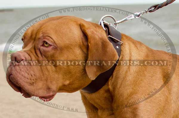 Dogue-de-Bordeaux leather collar wide