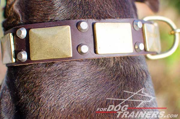 Wide leather collar with brass hardware and exclusive decoration for Pitbull