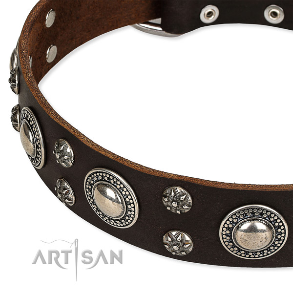 Brown leather dog collar with reliable hardware