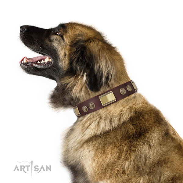 Leonberger stylish walking dog collar of fashionable genuine leather