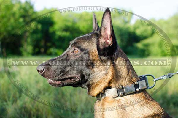 Exquisite leather collar for Malinois