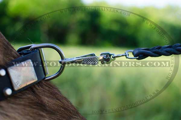 Reliable leather collar with buckle and D-ring for Malinois