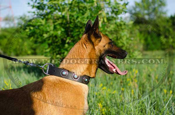 Multifunctional adorned collar made of genuine leather for Malinois