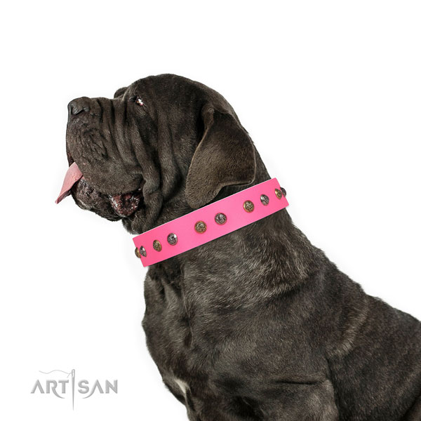 Mastino Neapoletano incredible full grain leather dog collar with studs