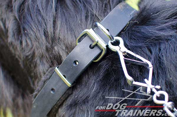 Leather Dog Collar with Nickel Plated D-ring