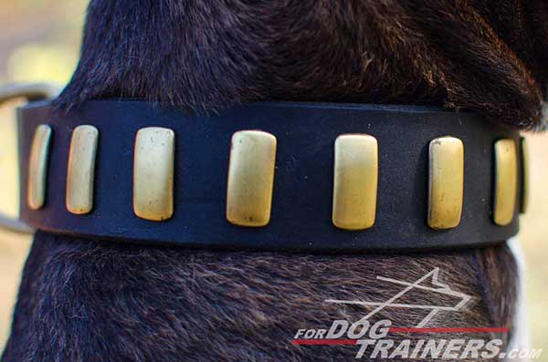 Decorated leather collar with brass plates for Pitbull