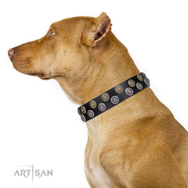 Pitbull unique full grain natural leather dog collar with studs