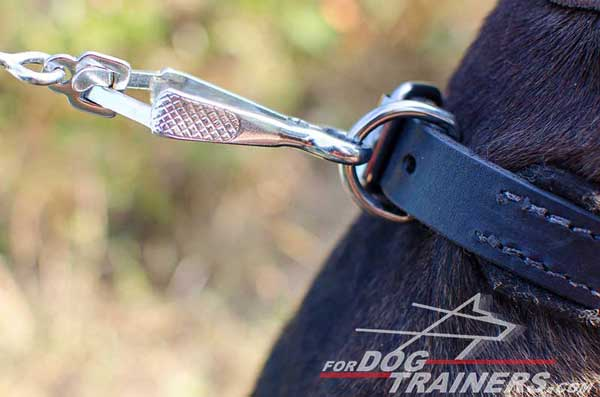 Durable Hardware on Leather Pitbull Collar