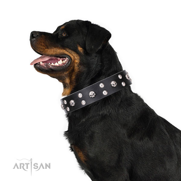 Rottweiler stunning full grain genuine leather dog collar with embellishments