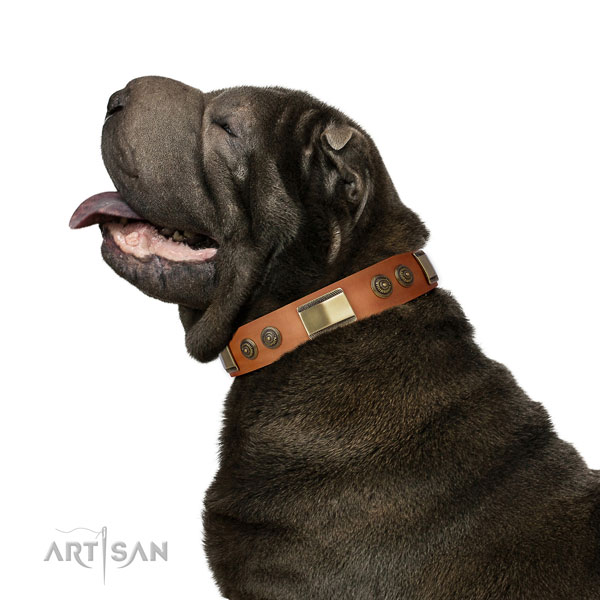 Shar Pei everyday walking dog collar of top notch quality leather