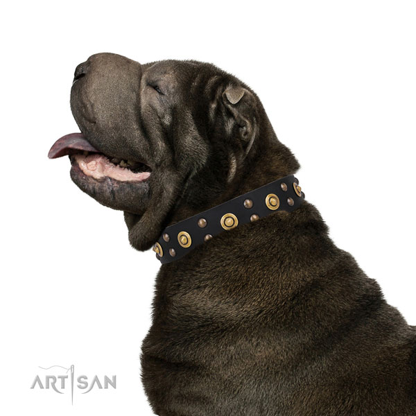 Shar Pei fancy walking dog collar of awesome quality genuine leather