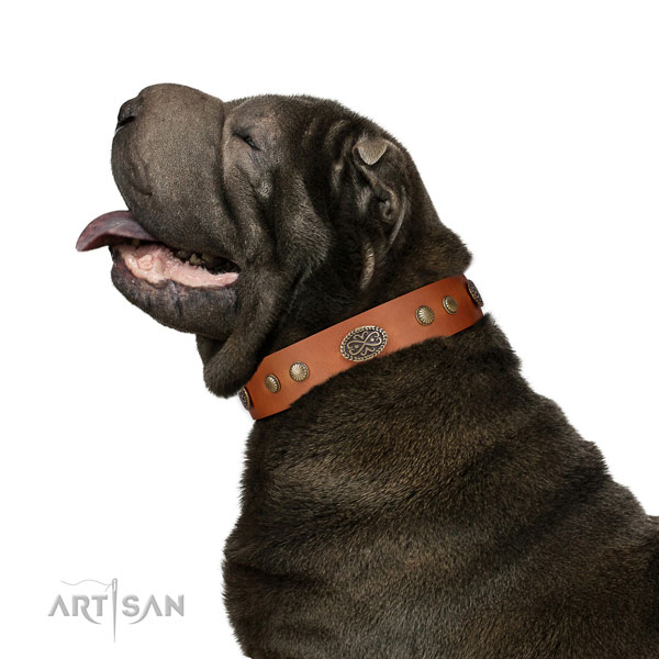 Shar Pei walking dog collar of exquisite quality leather