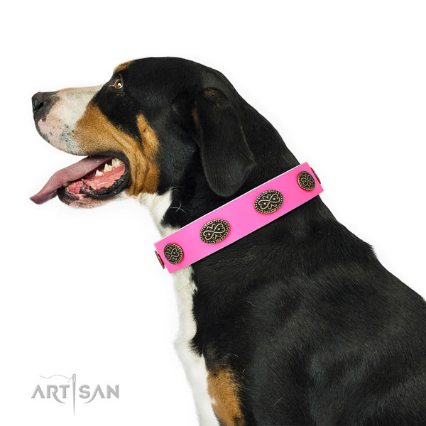 Swiss Mountain Dog walking dog collar of fine quality genuine leather