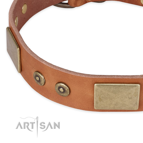 Tan leather dog collar with reliably attached decorations
