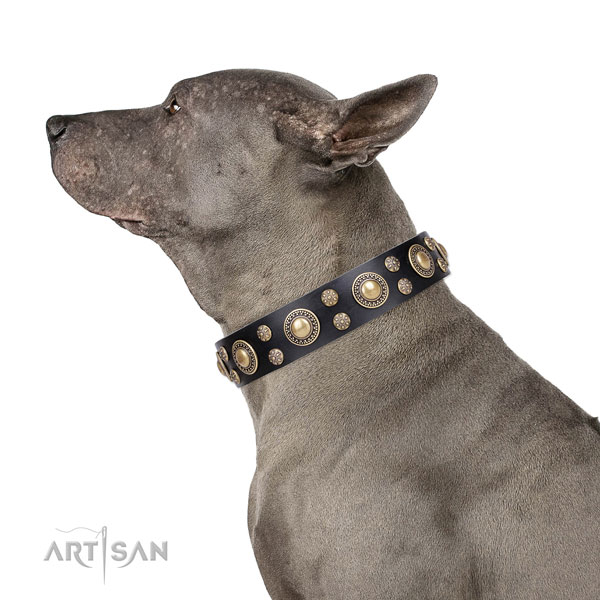 Thai Ridgeback exquisite leather dog collar with embellishments